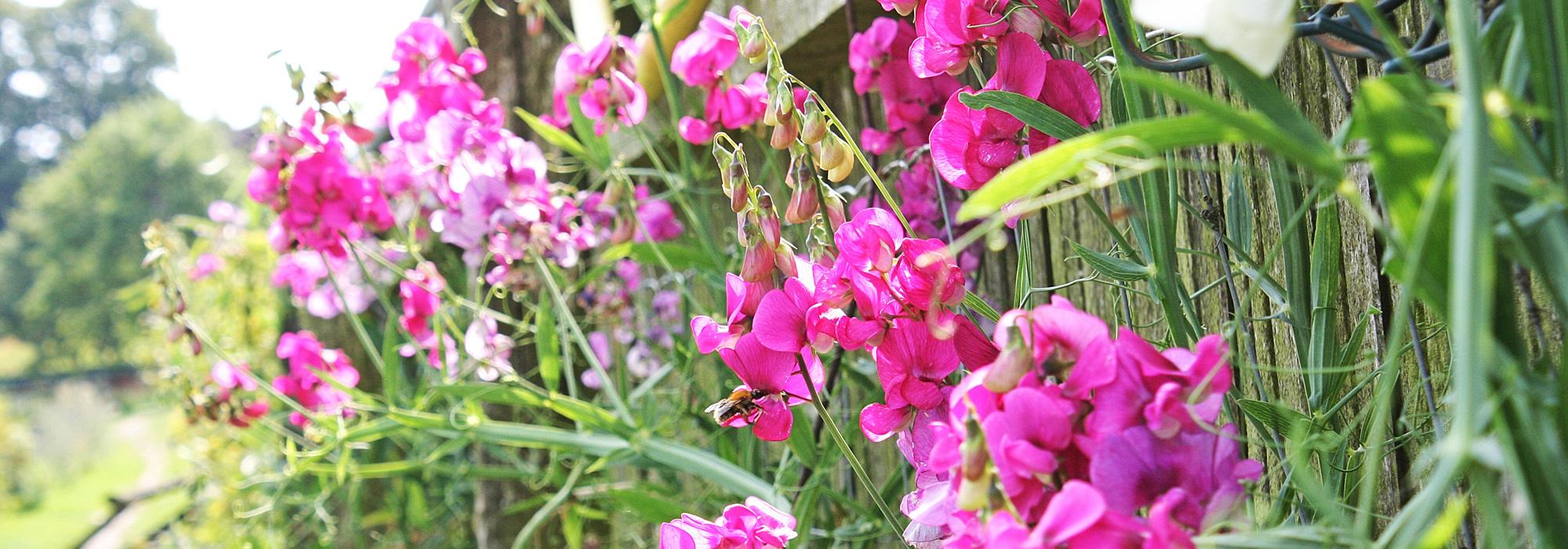 Blumen auf dem Gut Wulksfelde