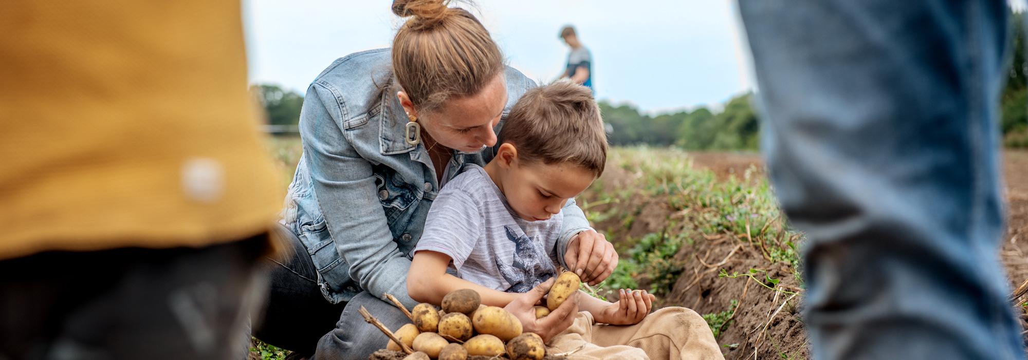 Familie beim Kartoffelbuddeln auf dem Gut Wulksfelde